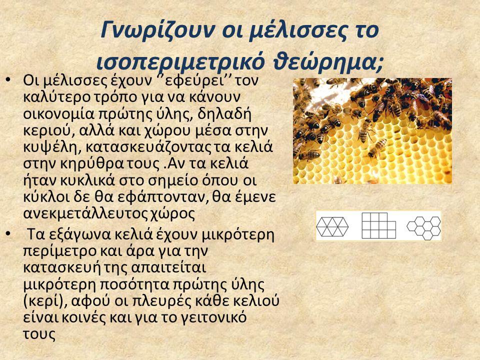 Γνωρίζουν οι μέλισσες το ισοπεριμετρικό θεώρημα; Οι μέλισσες έχουν ''εφεύρει'' τον καλύτερο τρόπο για να κάνουν οικονομία πρώτης ύλης, δηλαδή κεριού,