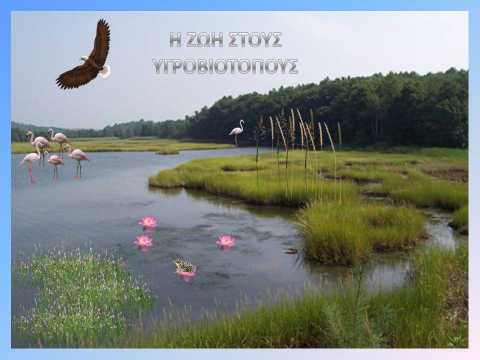 Λίμνη Πολυφύτου Είναι ενταγμένη στο Δίκτυο Προστατευόμενων Περιοχών Natura 2000