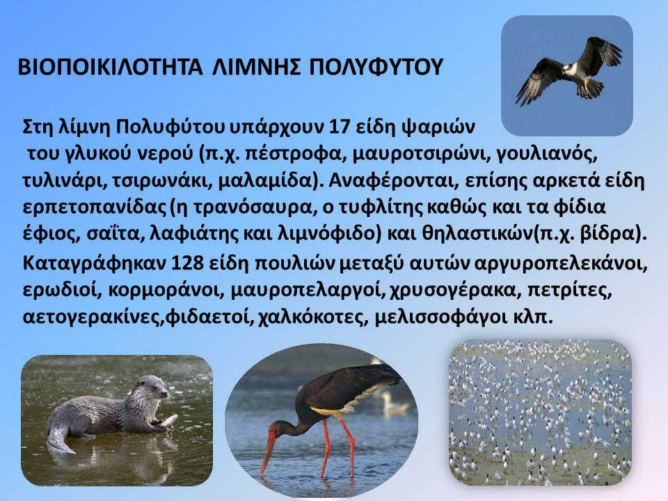 Στη λίμνη Πολυφύτου υπάρχουν 17 είδη ψαριών του γλυκού νερού (π.χ. πέστροφα, μαυροτσιρώνι, γουλιανός, τυλινάρι, τσιρωνάκι, μαλαμίδα). Αναφέρονται, επί
