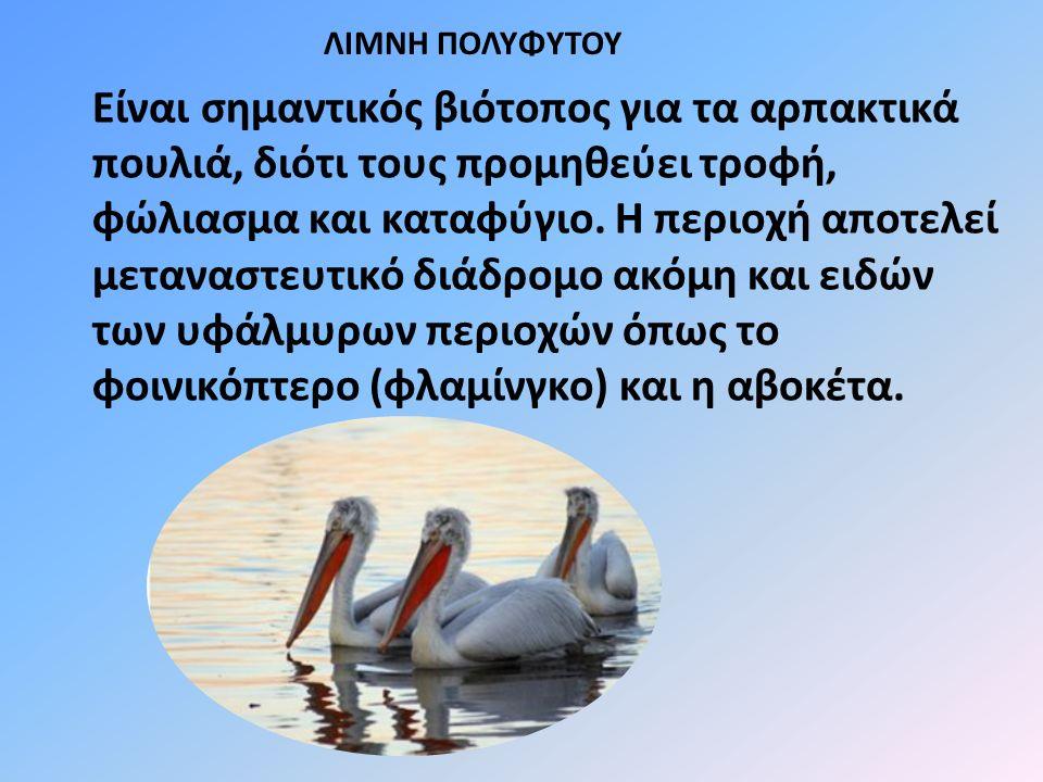 Είναι σημαντικός βιότοπος για τα αρπακτικά πουλιά, διότι τους προμηθεύει τροφή, φώλιασμα και καταφύγιο.