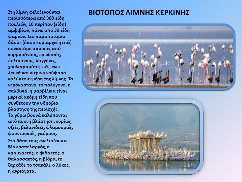 ΒΙΟΤΟΠΟΣ ΛΙΜΝΗΣ ΚΕΡΚΙΝΗΣ Στη λίμνη φιλοξενούνται περισσότερα από 300 είδη πουλιών, 10 περίπου (είδη) αμφιβίων, πάνω από 30 είδη ψαριών. Στο παραποτάμι