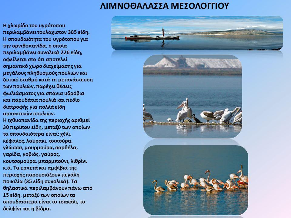 ΛΙΜΝΟΘΑΛΑΣΣΑ ΜΕΣΟΛΟΓΓΙΟΥ Η χλωρίδα του υγρότοπου περιλαμβάνει τουλάχιστον 385 είδη. Η σπουδαιότητα του υγρότοπου για την ορνιθοπανίδα, η οποία περιλαμ