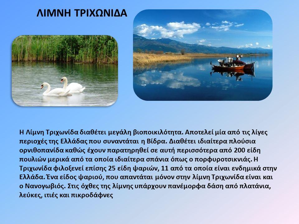 ΛΙΜΝΗ ΤΡΙΧΩΝΙΔΑ Η Λίμνη Τριχωνίδα διαθέτει μεγάλη βιοποικιλότητα. Αποτελεί μία από τις λίγες περιοχές της Ελλάδας που συναντάται η Βίδρα. Διαθέτει ιδι