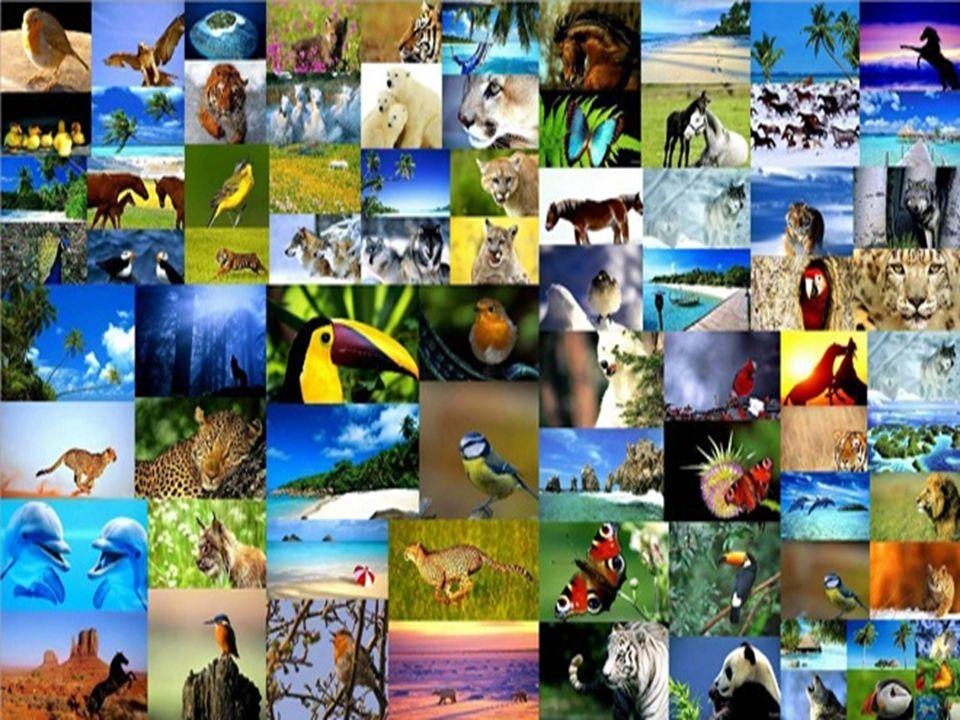 Απειλείται η βιοποικιλότητα; Τα περισσότερα από τα είδη που είναι σήμερα γνωστά έχουν αρχίσει να μειώνονται σημαντικά ή και να εξαφανίζονται.