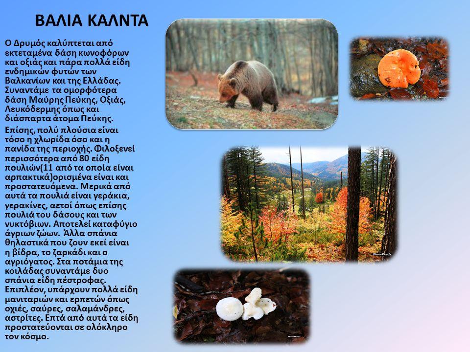 ΒΑΛΙΑ ΚΑΛΝΤΑ Ο Δρυμός καλύπτεται από εκτεταμένα δάση κωνοφόρων και οξιάς και πάρα πολλά είδη ενδημικών φυτών των Βαλκανίων και της Ελλάδας.