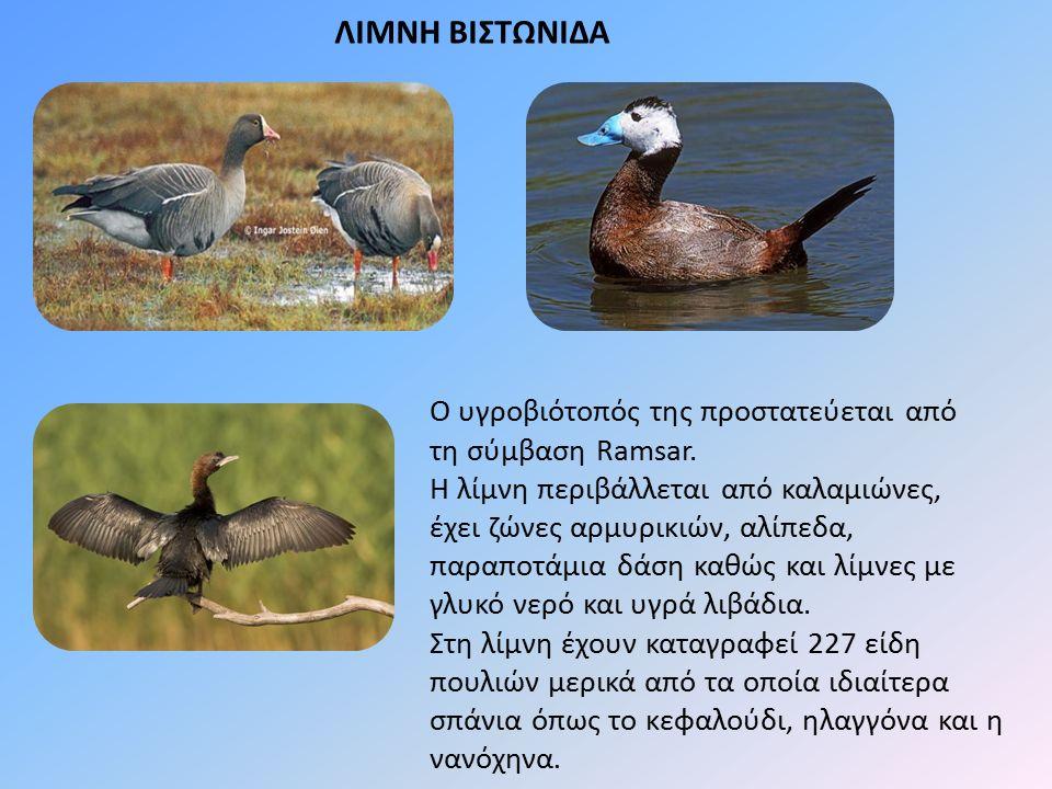 ΛΙΜΝΗ ΒΙΣΤΩΝΙΔΑ Ο υγροβιότοπός της προστατεύεται από τη σύμβαση Ramsar. Η λίμνη περιβάλλεται από καλαμιώνες, έχει ζώνες αρμυρικιών, αλίπεδα, παραποτάμ
