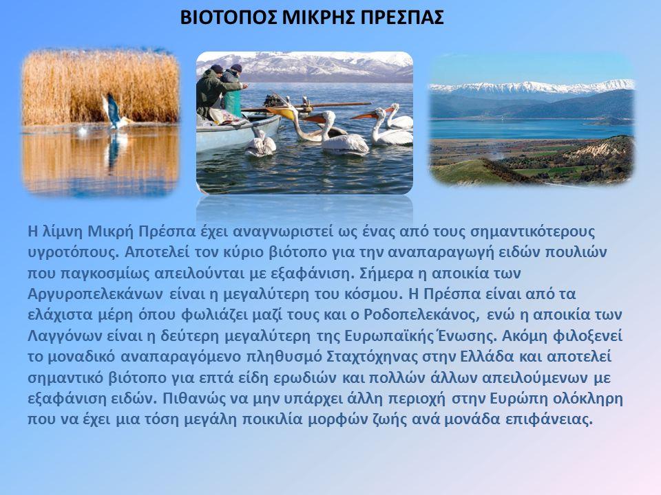 Η λίμνη Μικρή Πρέσπα έχει αναγνωριστεί ως ένας από τους σημαντικότερους υγροτόπους. Αποτελεί τον κύριο βιότοπο για την αναπαραγωγή ειδών πουλιών που π