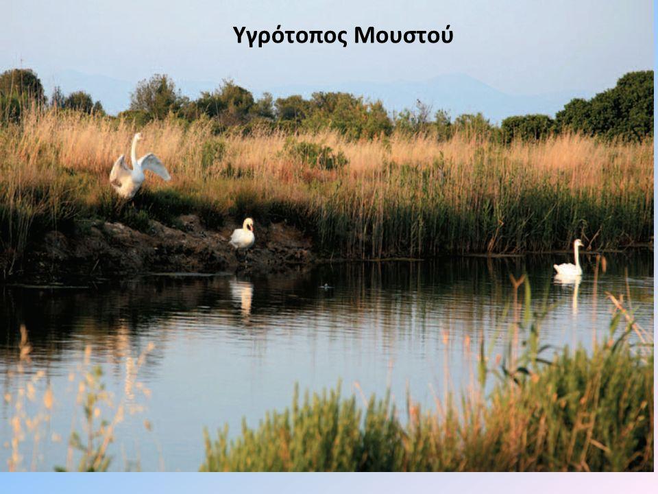 ΛΙΜΝΗ ΤΡΙΧΩΝΙΔΑ Η Λίμνη Τριχωνίδα διαθέτει μεγάλη βιοποικιλότητα.