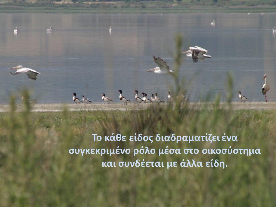 ΒΙΟΤΟΠΟΣ ΛΙΜΝΗΣ ΚΟΡΙΣΣΙΩΝ Η λίμνη συνδέεται με την θάλασσα μέσω μια στενής και ρηχής λωρίδας νερού.