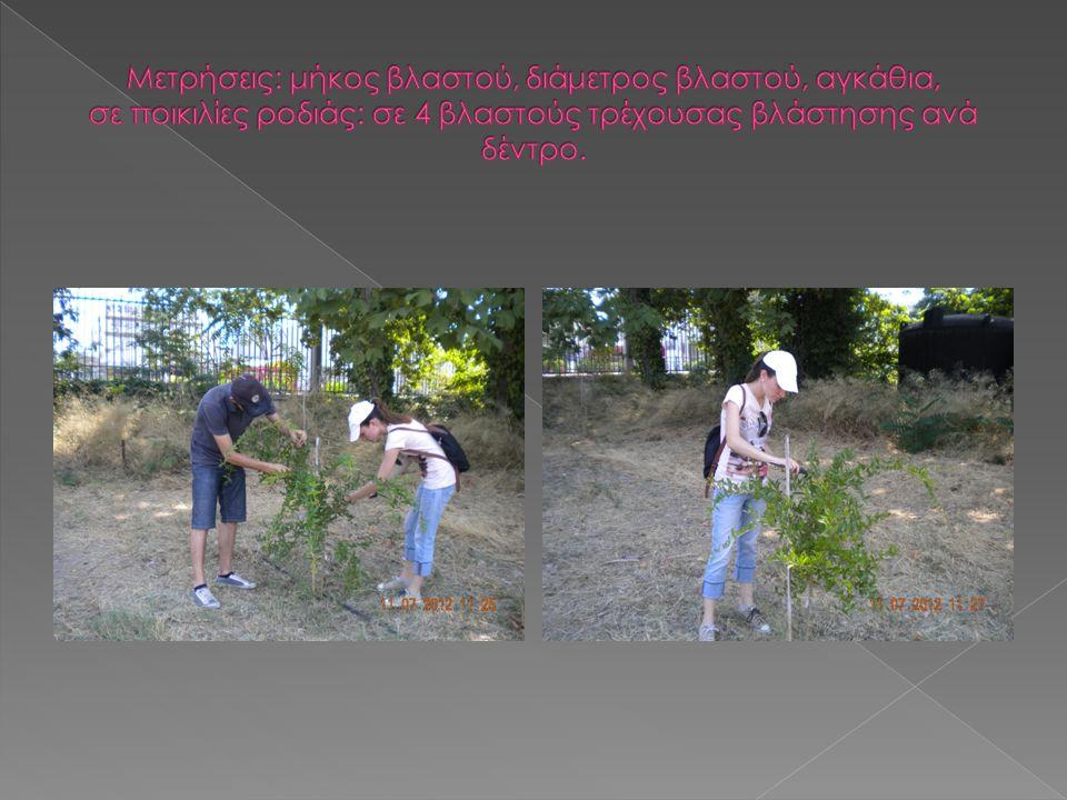 Η πρακτική άσκηση στο εργαστήριο δενδροκομίας βοήθησε στην εξοικείωση με τις βασικές δενδροκομικές εργασίες, όπως:  καταγραφή και αξιολόγηση χαρακτηριστικών που σχετίζονται με την ανάπτυξη και την καρποφορία των δένδρων,  συμμετοχή σε πειραματικές διαδικασίες, όπως: α.
