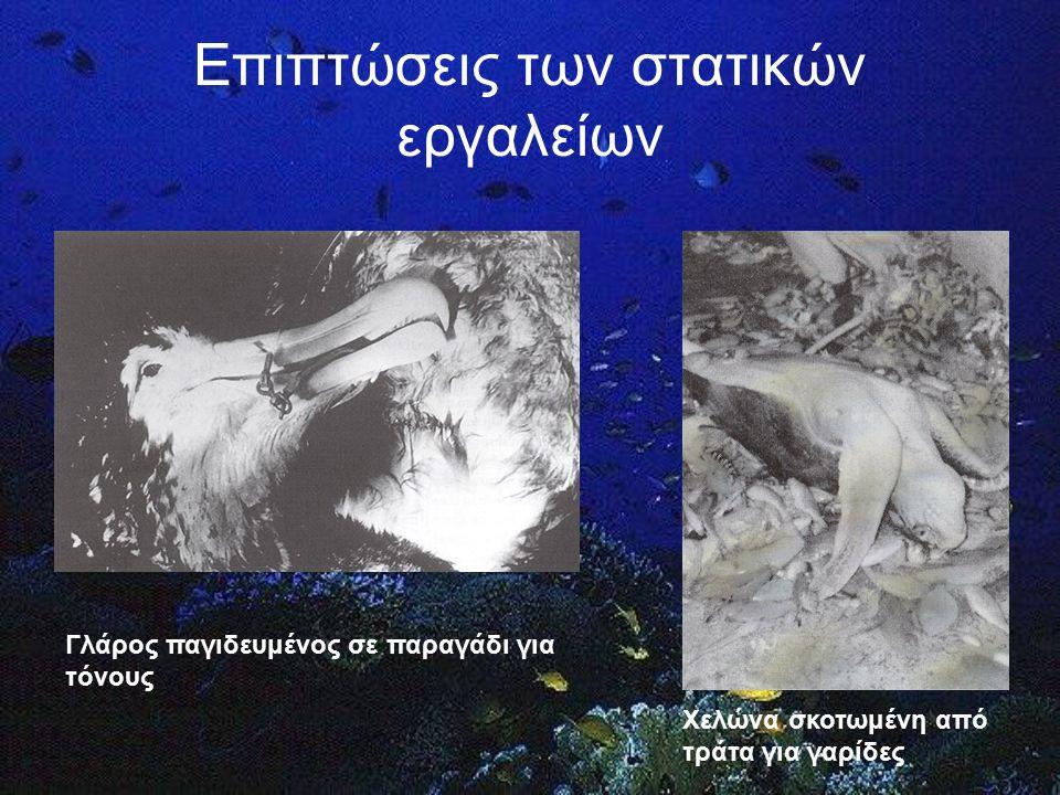Κατεστραμμένα στατικά εργαλεία Το φαινόμενο «Ghost fishing» (EIKONA FANTASMATOS)