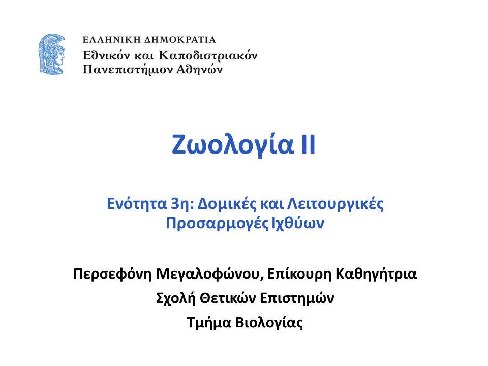 Zωολογία ΙΙ Ενότητα 3η: Δομικές και Λειτουργικές Προσαρμογές Ιχθύων Περσεφόνη Μεγαλοφώνου, Επίκουρη Καθηγήτρια Σχολή Θετικών Επιστημών Τμήμα Βιολογίας
