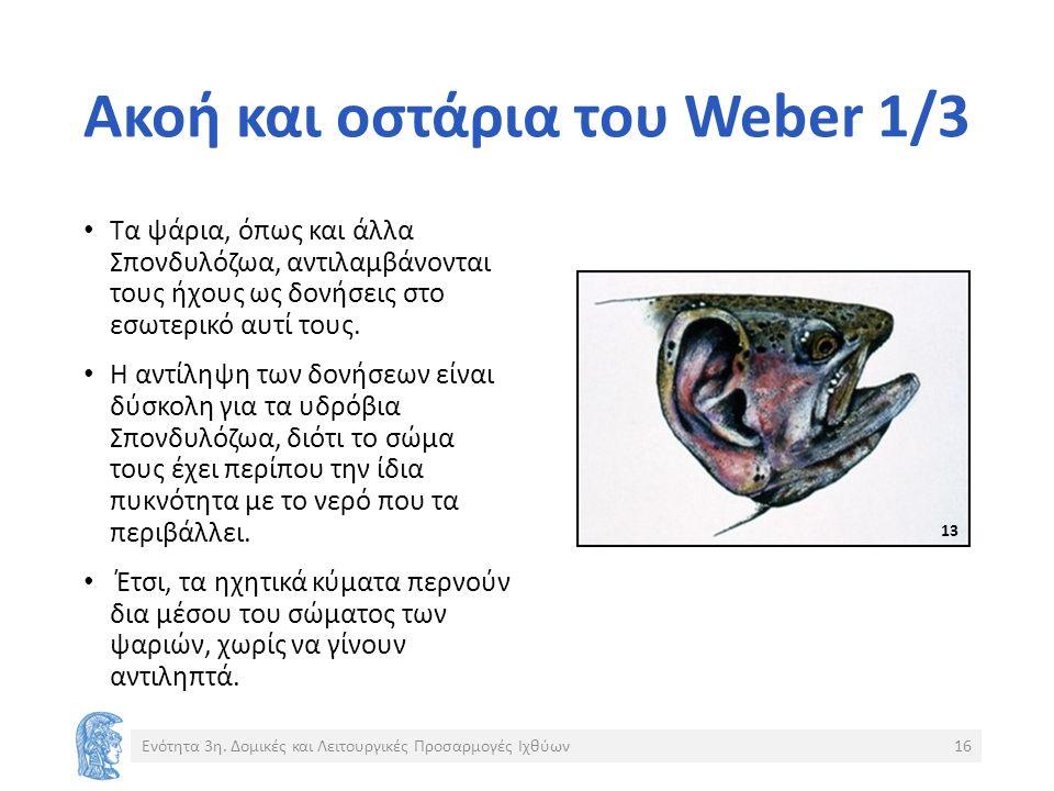 Ακοή και οστάρια του Weber 1/3 Τα ψάρια, όπως και άλλα Σπονδυλόζωα, αντιλαμβάνονται τους ήχους ως δονήσεις στο εσωτερικό αυτί τους.