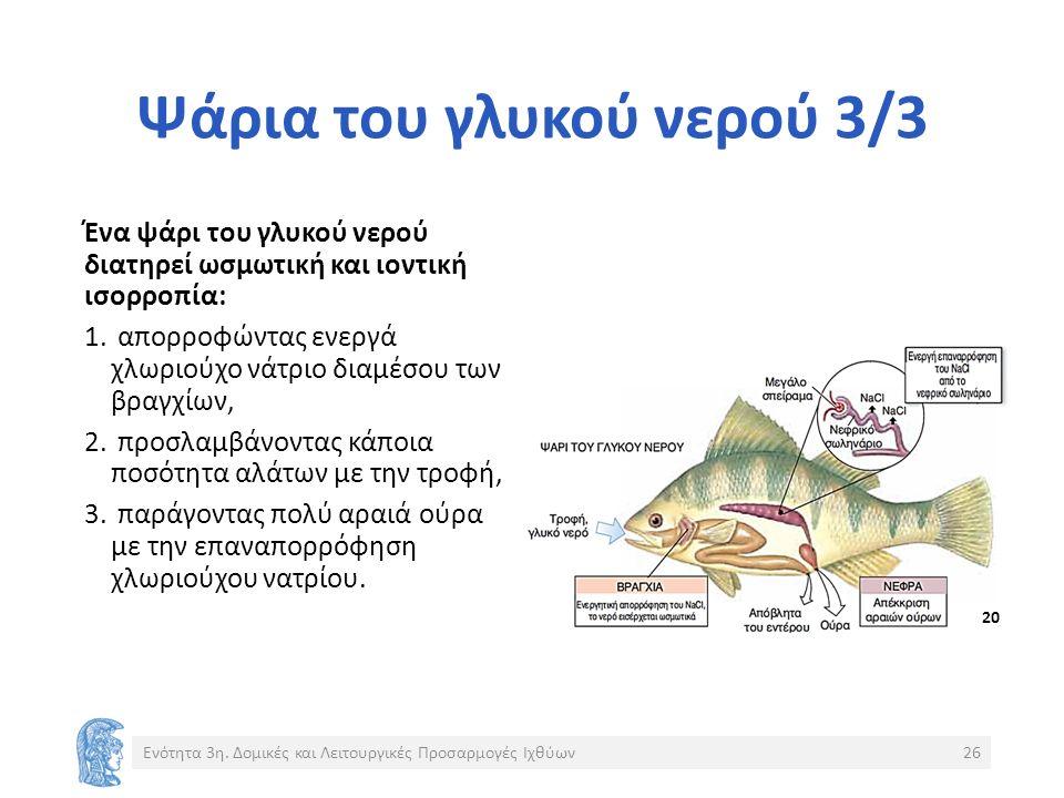 Ψάρια του γλυκού νερού 3/3 Ένα ψάρι του γλυκού νερού διατηρεί ωσμωτική και ιοντική ισορροπία: 1.