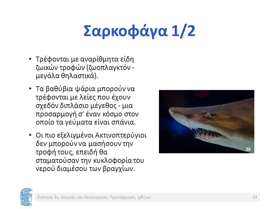 Σαρκοφάγα 1/2 Τρέφονται με αναρίθμητα είδη ζωικών τροφών (ζωοπλαγκτόν - μεγάλα θηλαστικά).