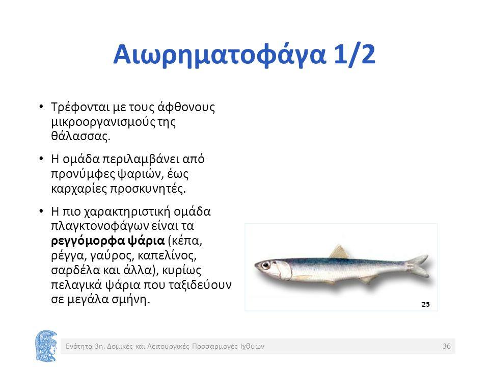 Αιωρηματοφάγα 1/2 Τρέφονται με τους άφθονους μικροοργανισμούς της θάλασσας.