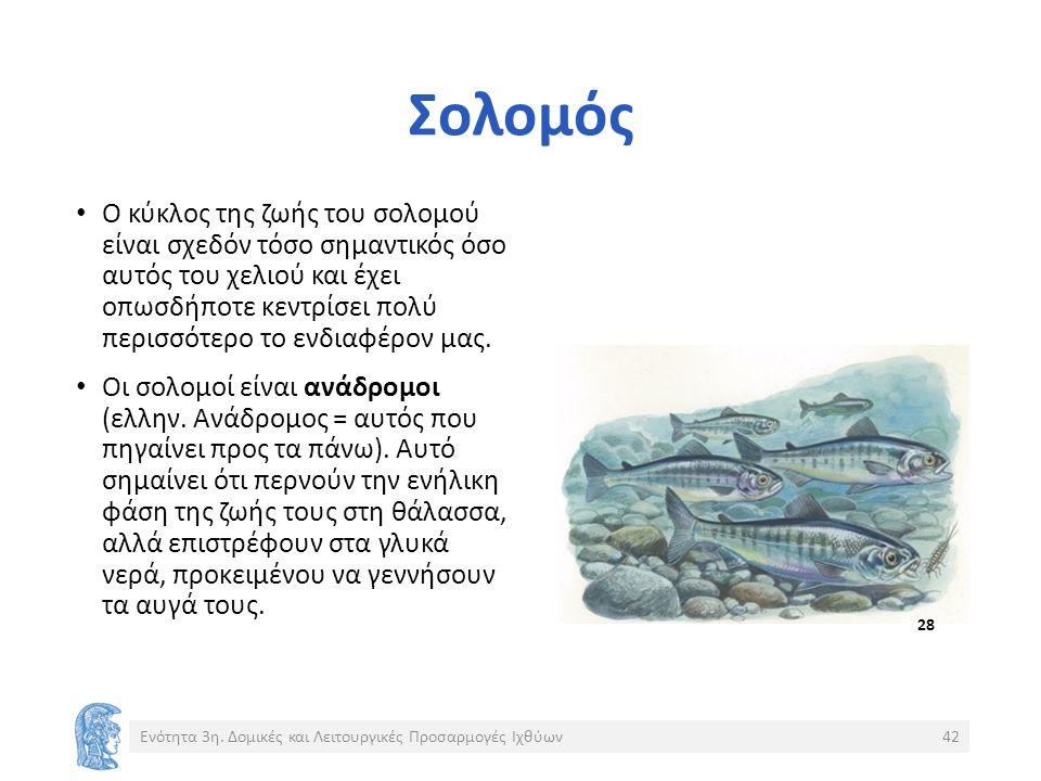 Σολομός Ο κύκλος της ζωής του σολομού είναι σχεδόν τόσο σημαντικός όσο αυτός του χελιού και έχει οπωσδήποτε κεντρίσει πολύ περισσότερο το ενδιαφέρον μας.