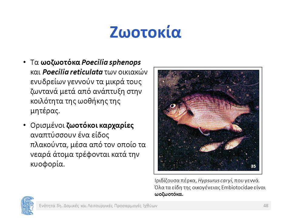 Ζωοτοκία Τα ωοζωοτόκα Poecilia sphenops και Poecilia reticulata των οικιακών ενυδρείων γεννούν τα μικρά τους ζωντανά μετά από ανάπτυξη στην κοιλότητα της ωοθήκης της μητέρας.
