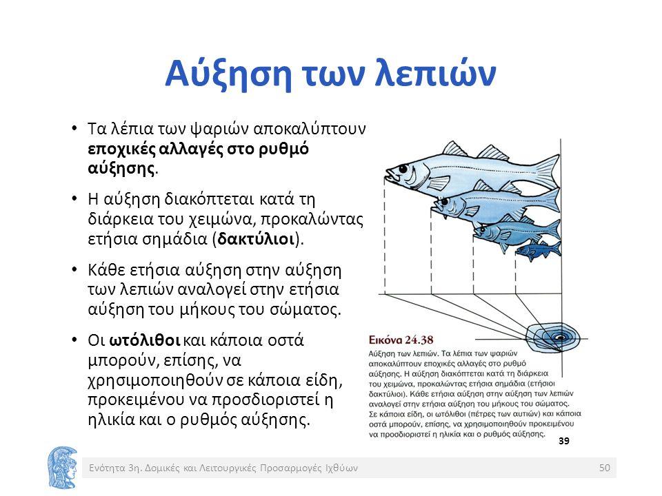 Αύξηση των λεπιών Τα λέπια των ψαριών αποκαλύπτουν εποχικές αλλαγές στο ρυθμό αύξησης.