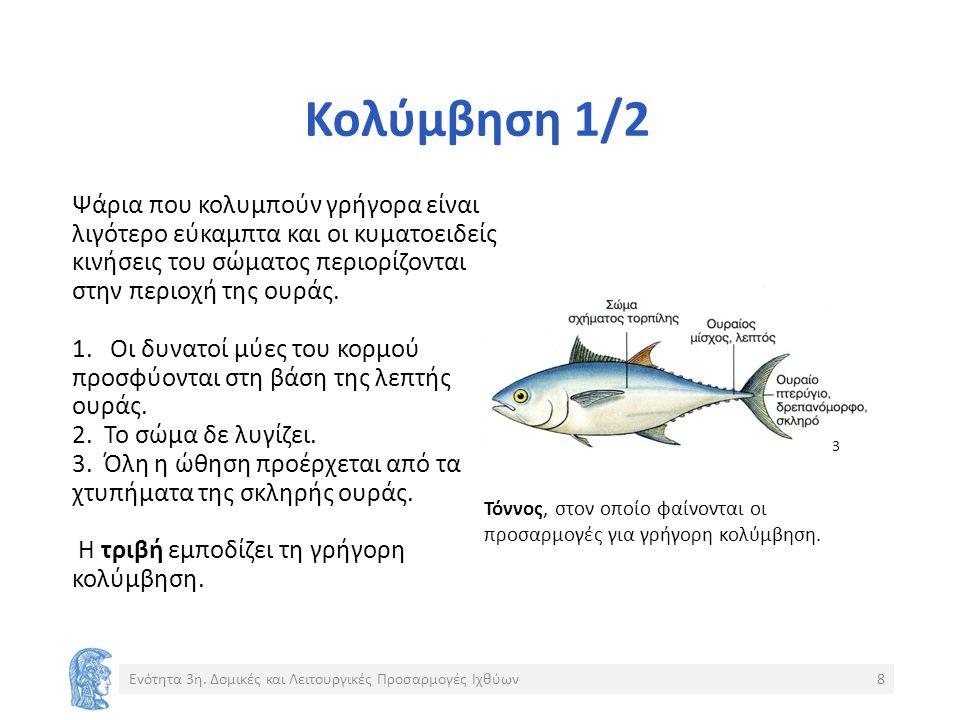 Κολύμβηση 1/2 Ψάρια που κολυμπούν γρήγορα είναι λιγότερο εύκαμπτα και οι κυματοειδείς κινήσεις του σώματος περιορίζονται στην περιοχή της ουράς.