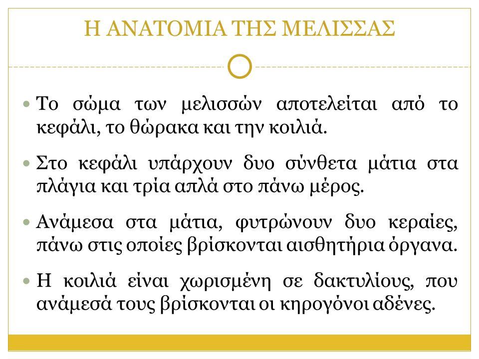 Η ΑΝΑΤΟΜΙΑ ΤΗΣ ΜΕΛΙΣΣΑΣ