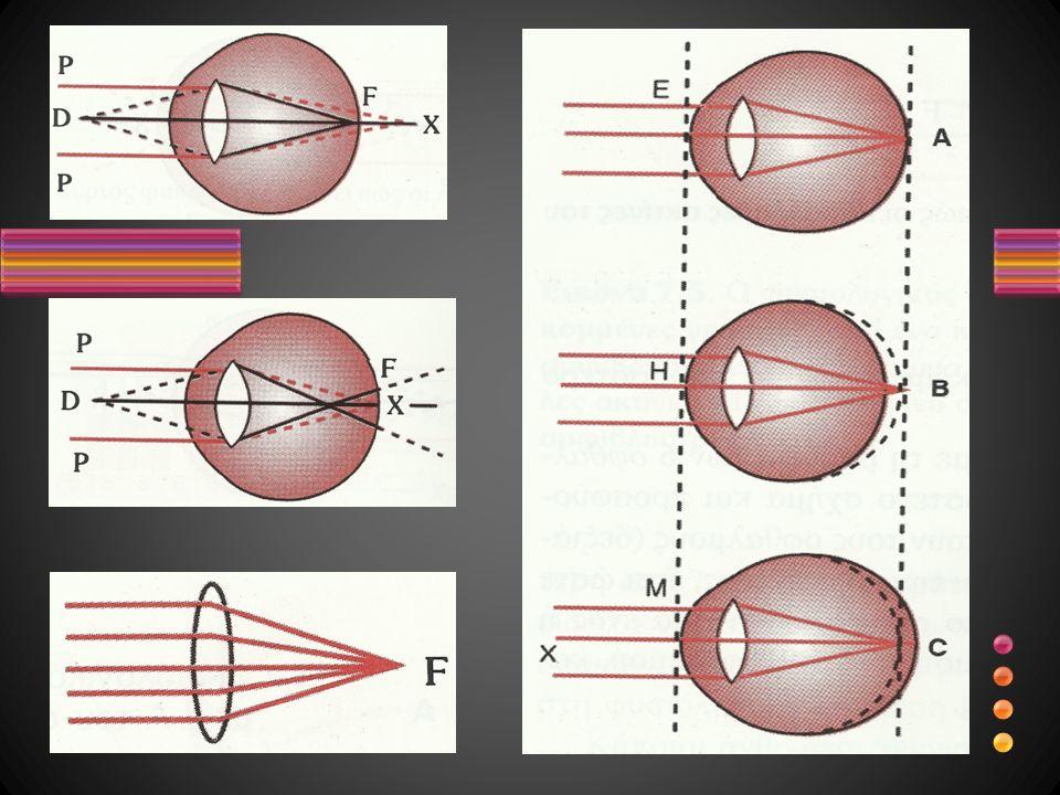 Φρύδια Βλέφαρα, βλεφαρίδες (επένδυση βλεφάρων με διαυγή βλεννογόνο μεμβράνη, η οποία ανακάμπτει στην πρόσθια επιφάνεια του οφθαλμικού βολβού και οναμάζεται ΕΠΙΠΕΦΥΚΟΤΑΣ, σχηματίζοντας άνω και κάτω θόλο) Κολλάνε σκόνη και βακτήρια Ξεπλένεται με την δακρυική συσκευή