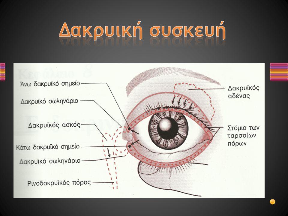1.Σχεδιάστε τον οφθαλμό και ονομάστε τα διάφορα τμήματά του 2.