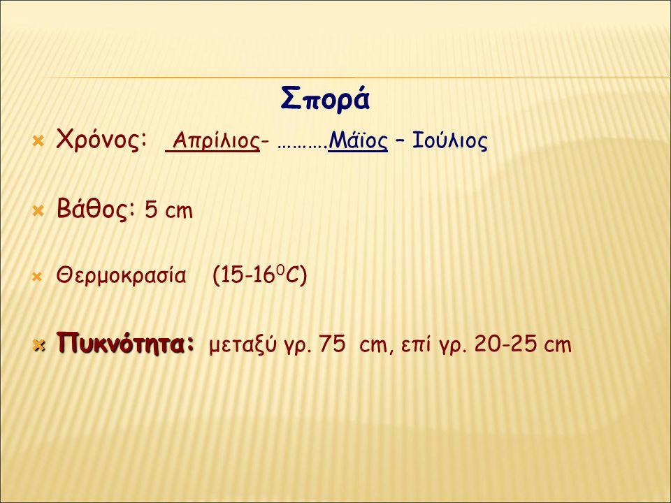 Σπορά  Χρόνος: Απρίλιος- ……….Μάϊος – Ιούλιος  Βάθος: 5 cm  Θερμοκρασία (15-16 0 C)  Πυκνότητα:  Πυκνότητα: μεταξύ γρ. 75 cm, επί γρ. 20-25 cm