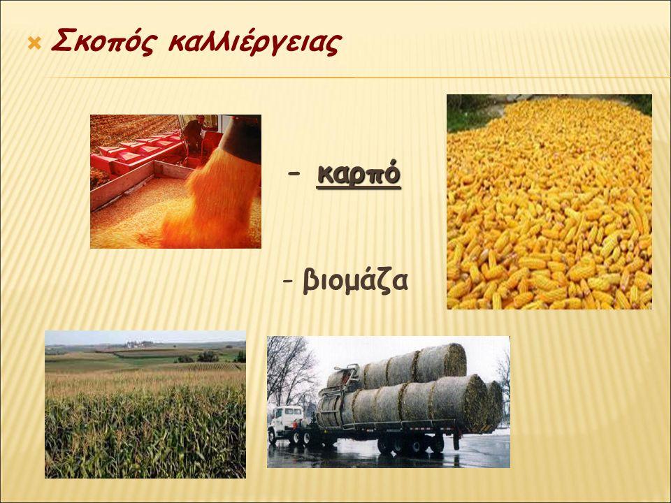  Σκοπός καλλιέργειας καρπό - καρπό - βιομάζα