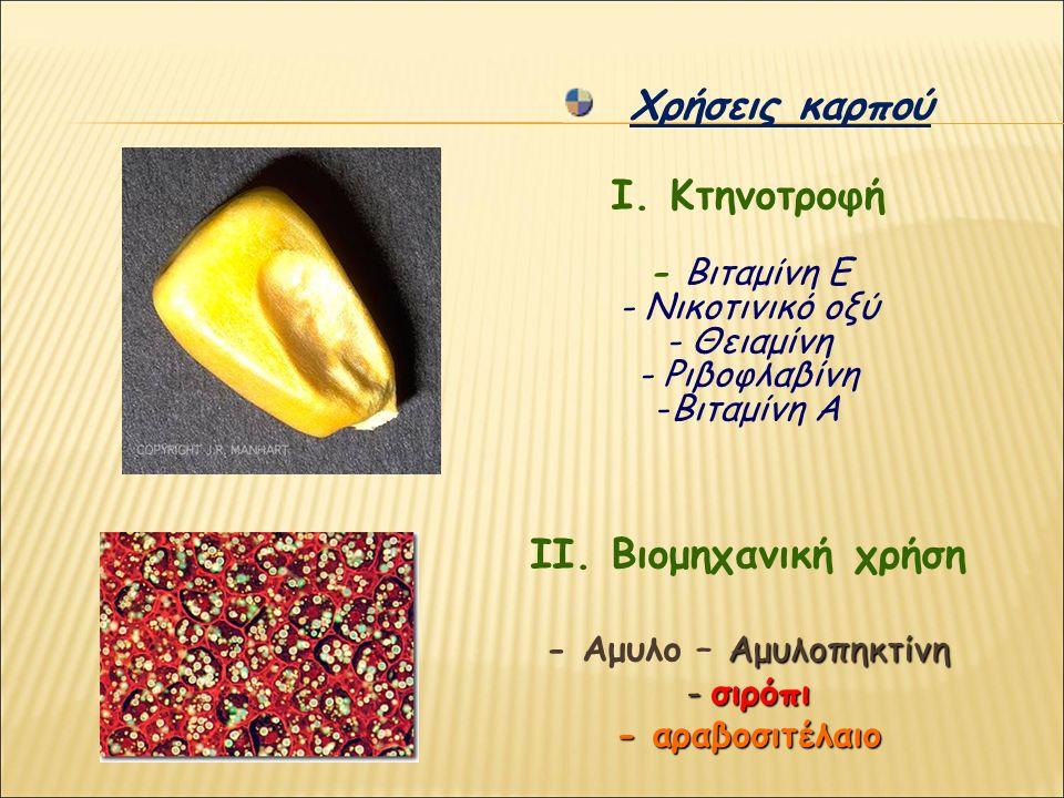 Χρήσεις καρπού Ι. Κτηνοτροφή - Βιταμίνη Ε - Νικοτινικό οξύ - Θειαμίνη - Ριβοφλαβίνη -Βιταμίνη Α ΙΙ. Βιομηχανική χρήση Αμυλοπηκτίνη - Αμυλο – Αμυλοπηκτ