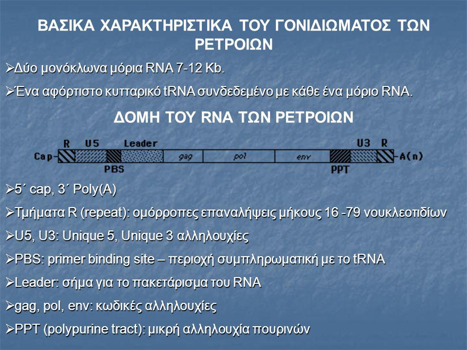  Το τυπικό ρετροϊικό γονιδίωμα περιλαμβάνει 3 γονίδια. Πηγή: Genes VIII
