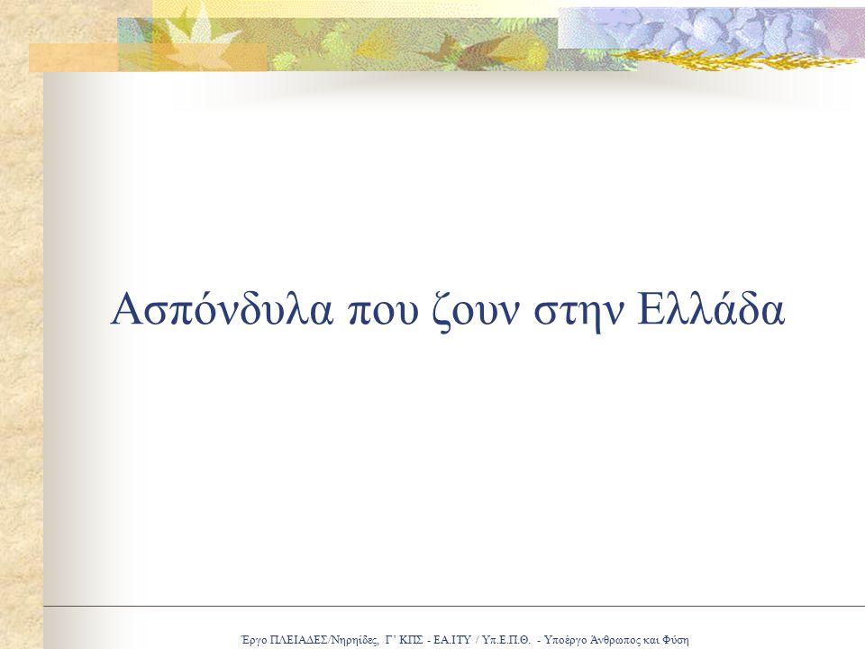 Έργο ΠΛΕΙΑΔΕΣ/Νηρηίδες, Γ' ΚΠΣ - ΕΑ.ΙΤΥ / Υπ.Ε.Π.Θ. - Υποέργο Άνθρωπος και Φύση Ασπόνδυλα που ζουν στην Ελλάδα