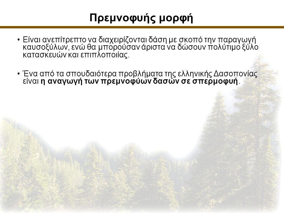 Σπερμοφυής μορφή Αυτή είναι η συνηθέστερη μορφή του φυσικού δάσους.
