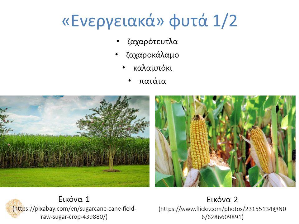 Καουτσούκ (ελαστικό κόμμι) λεύκα φύκος υάκινθος «Ενεργειακά» φυτά 1/2 Εικόνα 3 (https://en.wikipedia.org/wiki/Algae_fuel) Εικόνα 4 (https://en.wikipedia.org/wiki/Natural_rubber)
