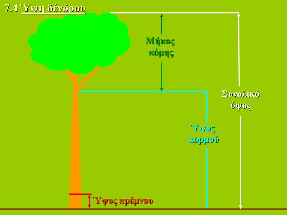 Συνολικόύψος Ύψοςκορμού 7.4 Ύψη δένδρου Ύψος πρέμνου Μήκοςκόμης