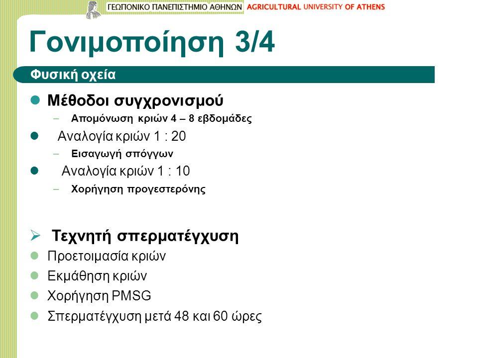 Γονιμοποίηση 3/4 Φυσική οχεία Μέθοδοι συγχρονισμού – Απομόνωση κριών 4 – 8 εβδομάδες Αναλογία κριών 1 : 20 – Εισαγωγή σπόγγων Αναλογία κριών 1 : 10 – Χορήγηση προγεστερόνης  Τεχνητή σπερματέγχυση Προετοιμασία κριών Εκμάθηση κριών Χορήγηση PMSG Σπερματέγχυση μετά 48 και 60 ώρες