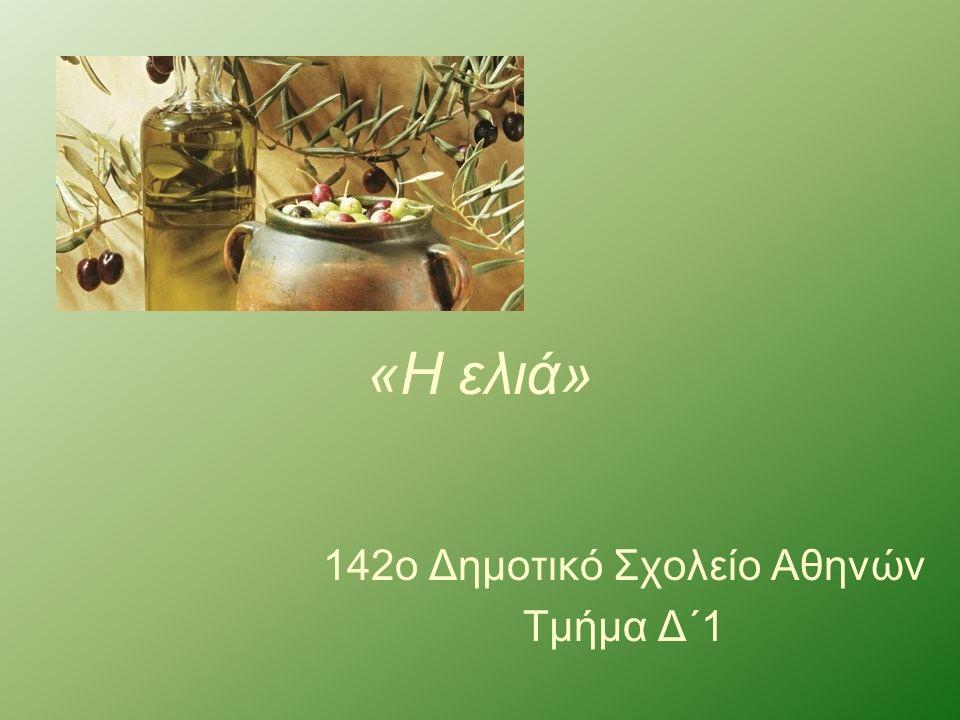«Η ελιά» 142ο Δημοτικό Σχολείο Αθηνών Τμήμα Δ΄1