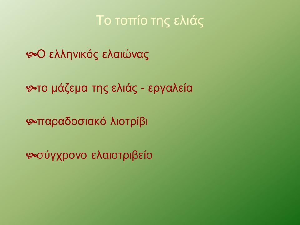 Το τοπίο της ελιάς  Ο ελληνικός ελαιώνας  το μάζεμα της ελιάς - εργαλεία  παραδοσιακό λιοτρίβι  σύγχρονο ελαιοτριβείο