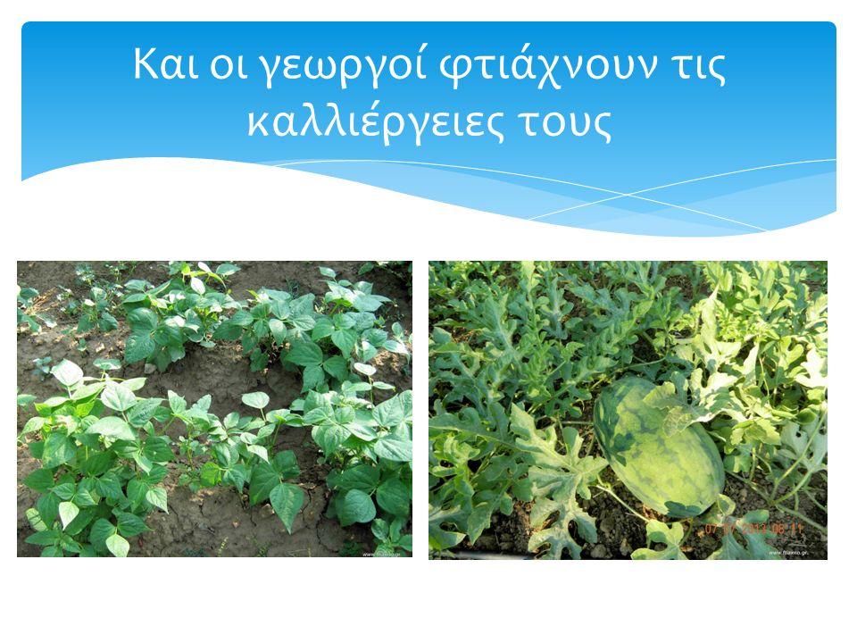 Και οι γεωργοί φτιάχνουν τις καλλιέργειες τους