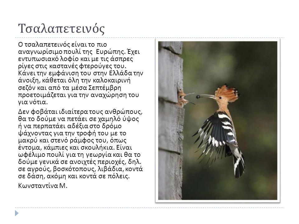 Τσαλαπετεινός Ο τσαλαπετεινός είναι το πιο αναγνωρίσιμο πουλί της Ευρώπης.