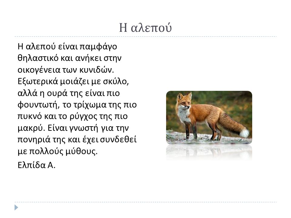 Η αλεπού Η αλεπού είναι παμφάγο θηλαστικό και ανήκει στην οικογένεια των κυνιδών.