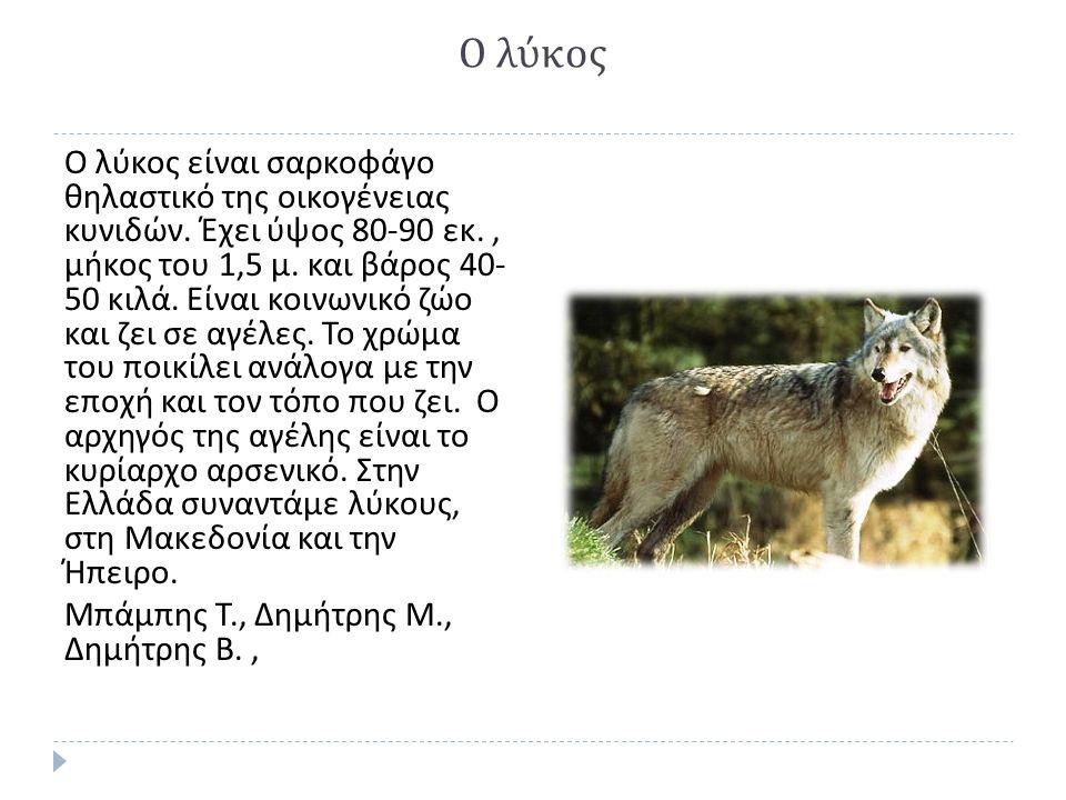 Ο λύκος Ο λύκος είναι σαρκοφάγο θηλαστικό της οικογένειας κυνιδών.