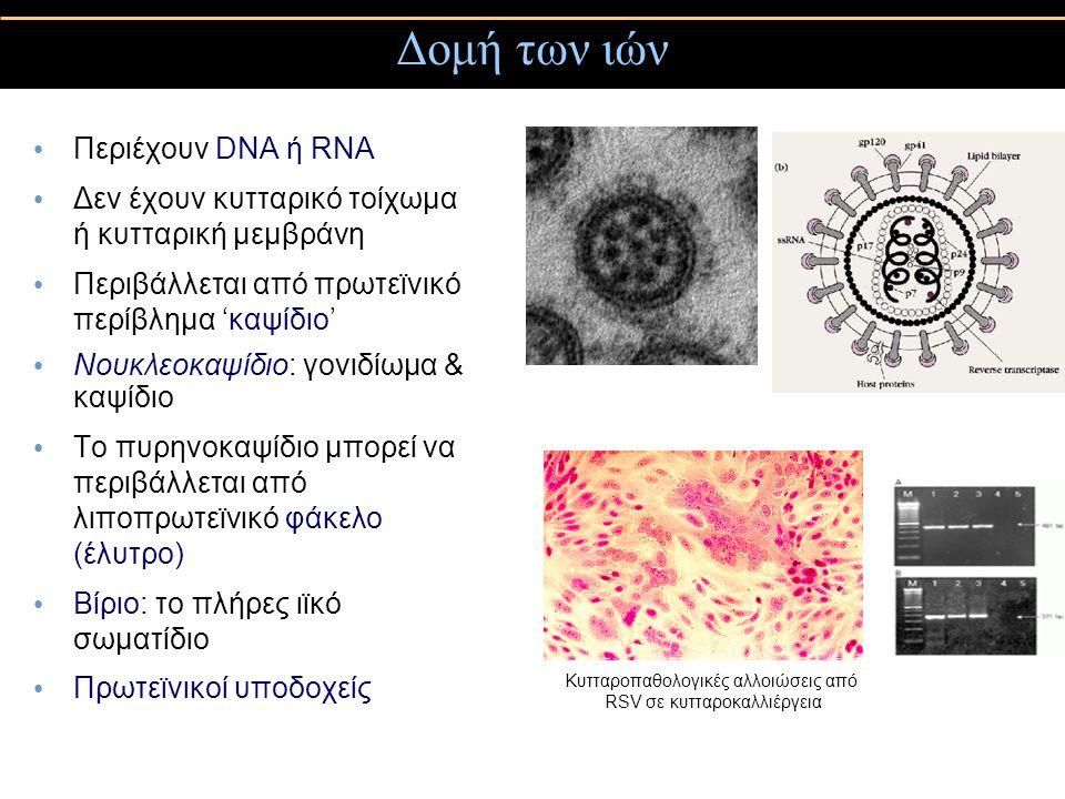 Δομή των ιών Περιέχουν DNA ή RNA Δεν έχουν κυτταρικό τοίχωμα ή κυτταρική μεμβράνη Περιβάλλεται από πρωτεϊνικό περίβλημα 'καψίδιο' Νουκλεοκαψίδιο: γονιδίωμα & καψίδιο Το πυρηνοκαψίδιο μπορεί να περιβάλλεται από λιποπρωτεϊνικό φάκελο (έλυτρο) Βίριο: το πλήρες ιϊκό σωματίδιο Πρωτεϊνικοί υποδοχείς Κυτταροπαθολογικές αλλοιώσεις από RSV σε κυτταροκαλλιέργεια