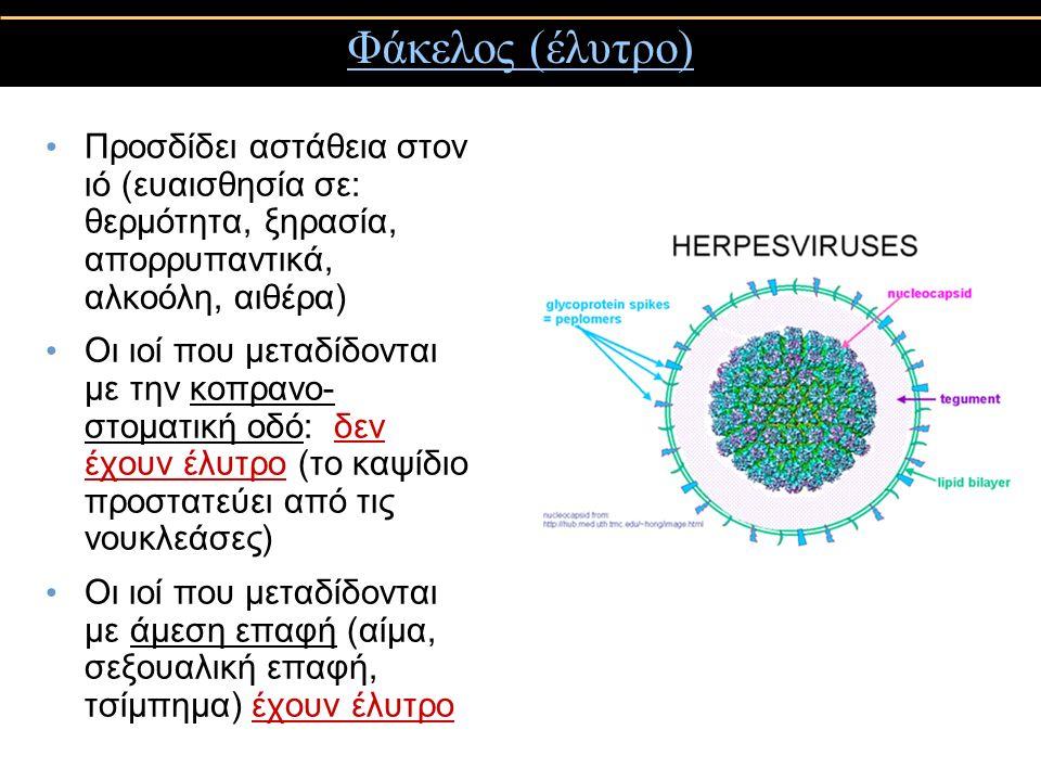 Φάκελος (έλυτρο) Προσδίδει αστάθεια στον ιό (ευαισθησία σε: θερμότητα, ξηρασία, απορρυπαντικά, αλκοόλη, αιθέρα) Οι ιοί που μεταδίδονται με την κοπρανο- στοματική οδό: δεν έχουν έλυτρο (το καψίδιο προστατεύει από τις νουκλεάσες) Οι ιοί που μεταδίδονται με άμεση επαφή (αίμα, σεξουαλική επαφή, τσίμπημα) έχουν έλυτρο