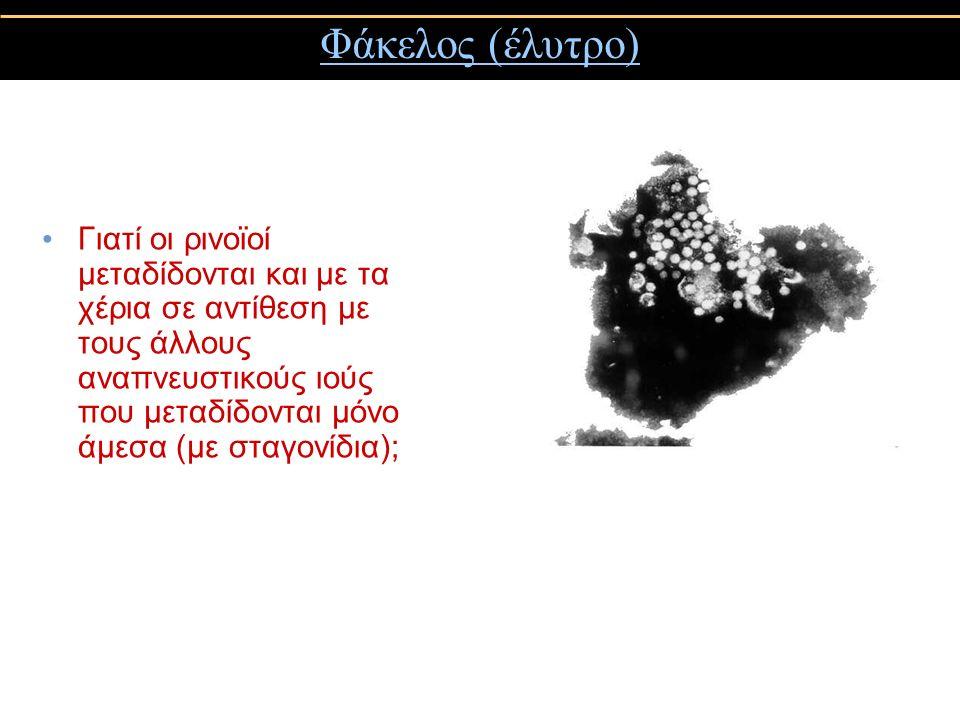 Φάκελος (έλυτρο) Γιατί οι ρινοϊοί μεταδίδονται και με τα χέρια σε αντίθεση με τους άλλους αναπνευστικούς ιούς που μεταδίδονται μόνο άμεσα (με σταγονίδια);