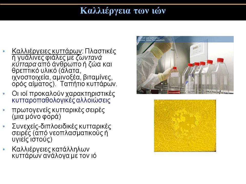 Καλλιέργεια των ιών Καλλιέργειες κυττάρων: Πλαστικές ή γυάλινες φιάλες με ζωντανά κύτταρα από άνθρωπο ή ζώα και θρεπτικό υλικό (άλατα, ιχνοστοιχεία, αμινοξέα, βιταμίνες, ορός αίματος).