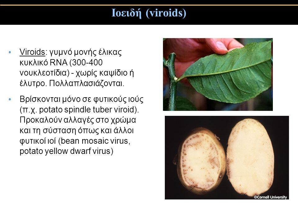 Ιοειδή (viroids) Viroids: γυμνό μονής έλικας κυκλικό RNA (300-400 νουκλεοτίδια) - χωρίς καψίδιο ή έλυτρο.