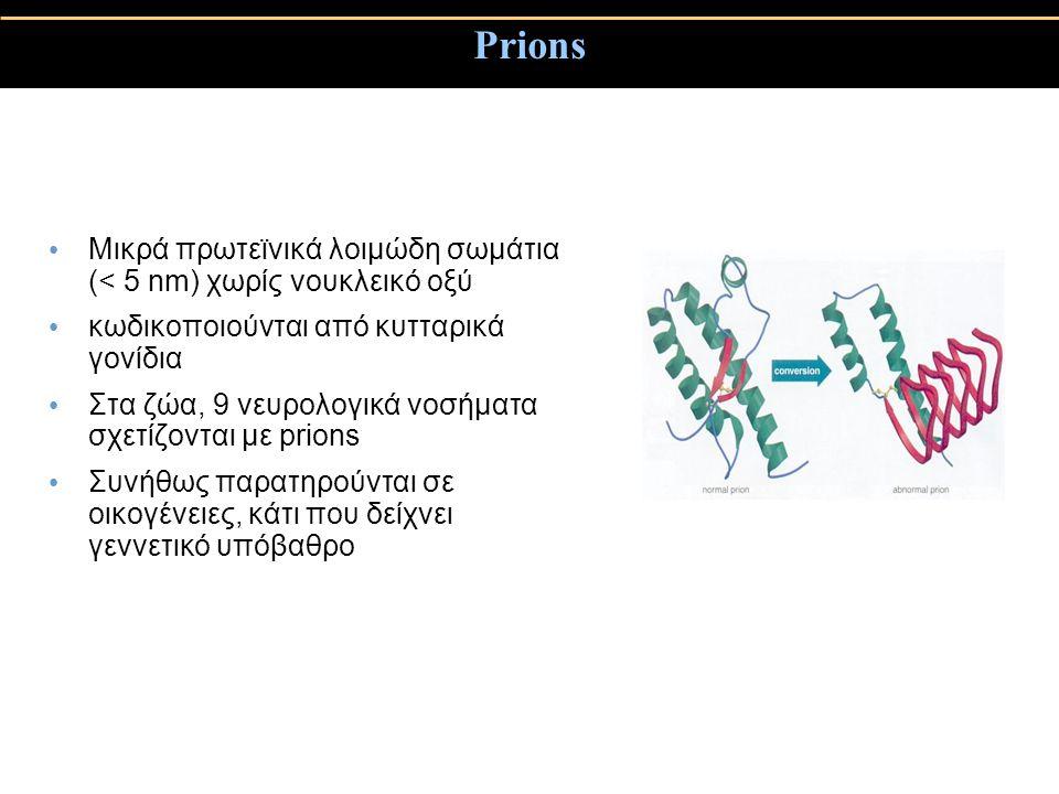 Prions Μικρά πρωτεϊνικά λοιμώδη σωμάτια (< 5 nm) χωρίς νουκλεικό οξύ κωδικοποιούνται από κυτταρικά γονίδια Στα ζώα, 9 νευρολογικά νοσήματα σχετίζονται με prions Συνήθως παρατηρούνται σε οικογένειες, κάτι που δείχνει γεννετικό υπόβαθρο