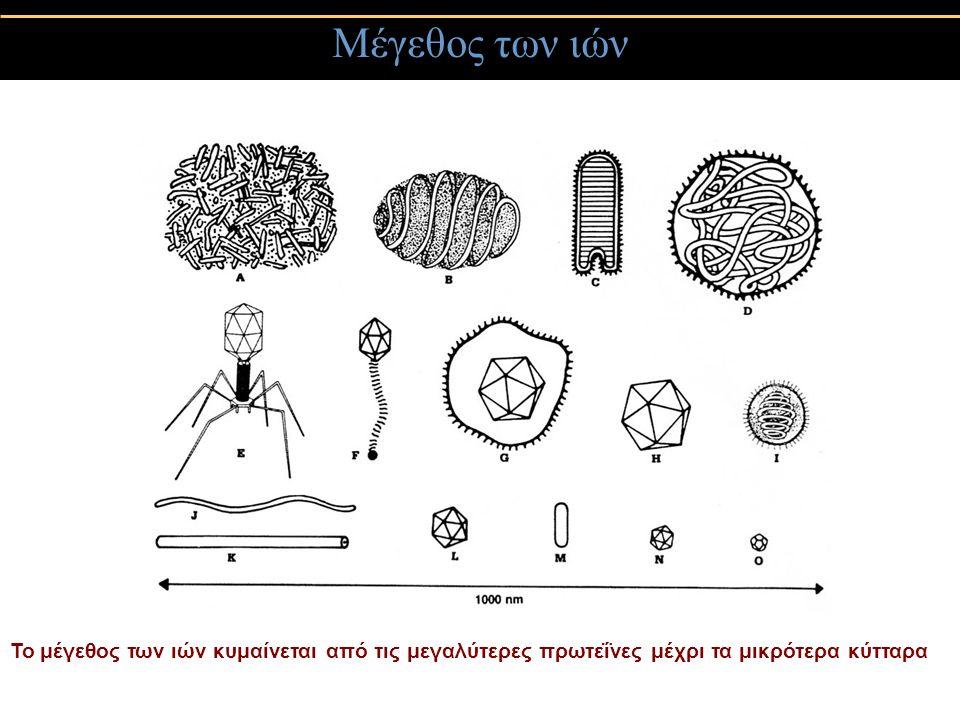 Συμμετρία των ιών 3) Σύνθετη συμμετρία Ιοί που δεν κατατάσσονται στην κυβική ή ελικοειδή συμμετρία (poxviruses)- δεν έχουν ξεκάθαρα καψίδια αλλά στρώματα που περιβάλουν το γενετικό υλικό, ή που έχουν και τις δύο συμμετρίες (βακτηριοφάγοι)- πολυεδρική κεφαλή & ελικοειδή λαιμό
