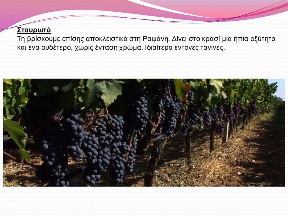 Σταυρωτό Τη βρίσκουμε επίσης αποκλειστικά στη Ραψάνη. Δίνει στο κρασί μια ήπια οξύτητα και ένα ουδέτερο, χωρίς ένταση χρώμα. Ιδιαίτερα έντονες τανίνες